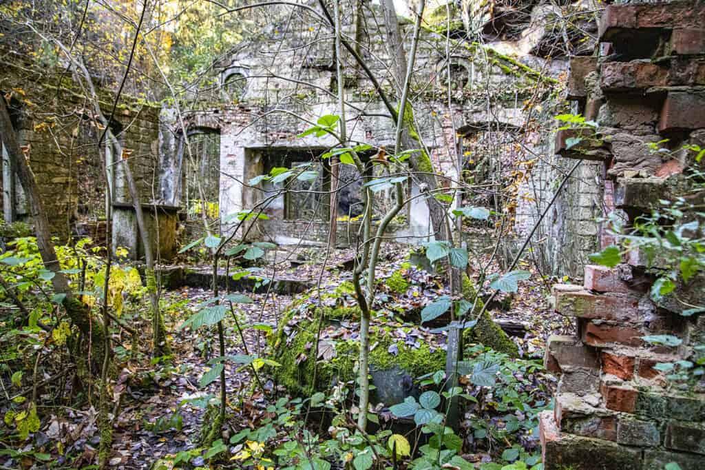 Övervuxen trädgård